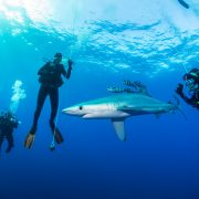 Pico_Sport_Diving_With_Sharks_004