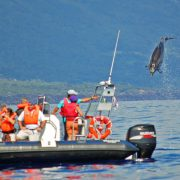 Scuba-Azores-Dolphin-Watching-001