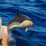 Scuba-Azores-Dolphin-Watching-003